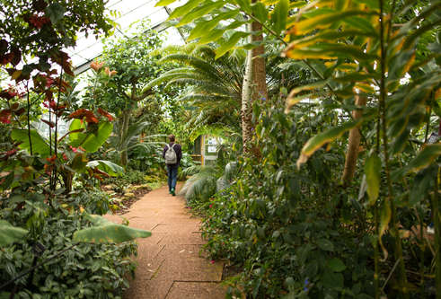 Person walking along path surrounded by exotic green plants